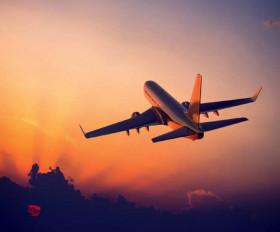 टिड्डी दल के उड़ने से विमानों के उड़ान भरने, लैंड करने में आ रही परेशानी, डीजीसीए ने जारी किए निर्देश