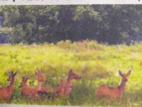 लॉकडाउन का असर - दो महीने में दो गुना फैला जंगल एरिया, तीन गुना बढ़े वन्य जीव