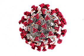 अब नागपुर रेड जोन में, कोरोना का बढ़ रहा संक्रमण