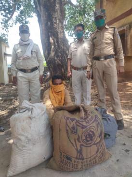 21 किलो गांजा के साथ ओरोपी गिरफ्तार - अपने खेत में था उगााया