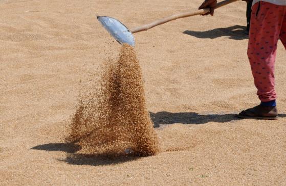 बेमौसम बरसात, कोरोना के कहर के बावजूद देश में गेहूं का रिकॉर्ड उत्पादन
