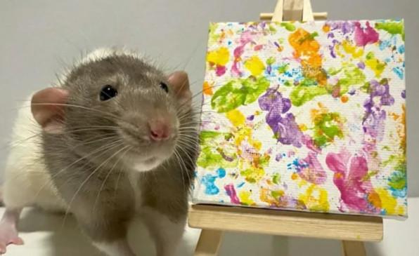 अजब-गजब: चूहे ने पैरों से बनाई पेंटिंग, कमाए इतने रूपए