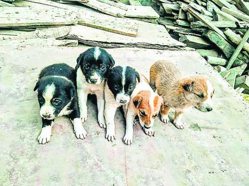 श्वान के पिल्लों को बोरी में भरकर जंगल में छोड़ा, कार्रवाई होने पर वापस लाया