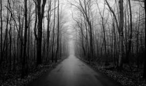 अजब-गजब: दुनिया का सबसे रहस्यमयी जंगल, यहां एक बार जो जाता है फिर कभी लौटकर वापस नहीं आता