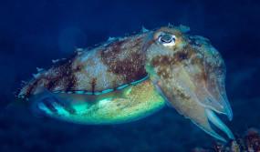 अजब-गजब: इस समुद्री मछली के शरीर में होते हैं 3 दिल, खून का रंग भी नहीं है लाल