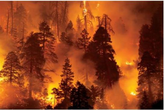 Fake News: पुरानी तस्वीर उत्तराखंड के जंगलों में लगी आग बताकर हो रही वायरल