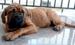 कुत्ते क्यों हमेशा परेशानी में अपने मालिकों को बचाते हैं