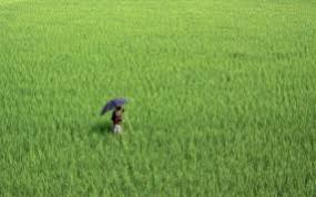 कृषि दिवस मनाने पंचायत समिति को 5 हजार और जिला परिषद को 10 हजार रुपए खर्च को मंजूरी
