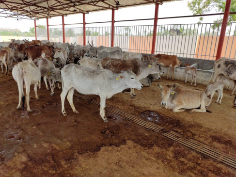 मंत्रिमडल ने 15000 करोड़ रुपये की पशुपालन अवसंरचना विकास निधि को मंजूरी दी