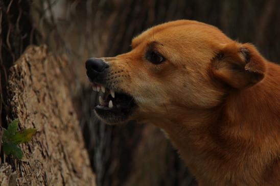 ग्रेटर नोएडा एटीएस सोसाइटी में कुत्ते की मृत्यु पर असमंजस