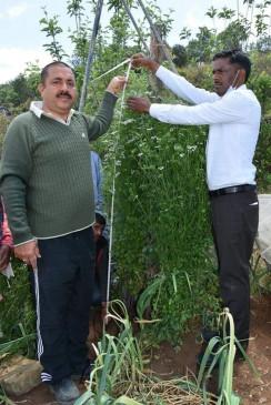 सबसे ऊंचा धनिये का पौधा: पहाड़ में उगाया 7.1 फुट का पौधा, गिनीज वर्ल्ड रिकॉर्डस में दर्ज
