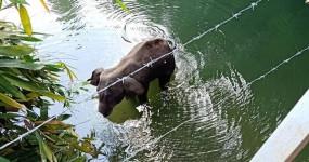 Elephant Death: पर्यावरण मंत्रालय ने कहा- केरल में हथिनी ने गलती से पटाखे से भरा फल खाया होगा