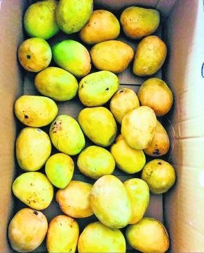 संतरानगरी नागपुर के आम का सिंगापुर में निर्यात