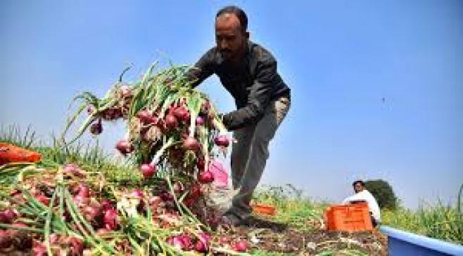चंद्रपुर-यवतमाल सहित चार जिलों के किसानों को मिलेगा अनुदान, प्याज बेचने वालों को होगा लाभ