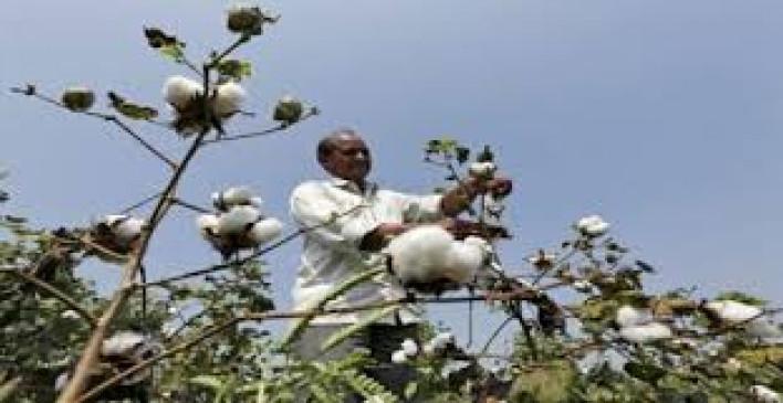 हाथ में फलक थाम किसान करेंगे प्रदर्शन, एचटीबीटी कपास को लेकर होगा खेत में प्रदर्शन