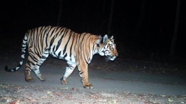 बाघ के हमलों को रोकने के लिए उप्र के जिले में फोर्स तैनात