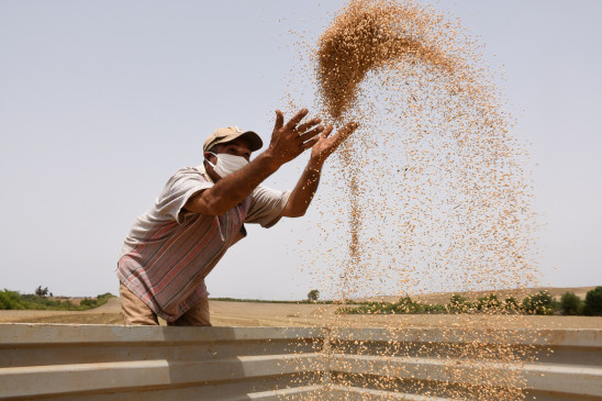 सुस्त पड़ी गेहूं की सरकारी खरीद, 400 लाख टन भी पहुंचना मुश्किल