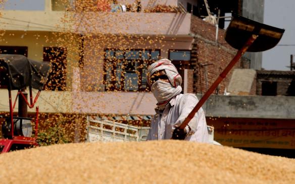 सरकारी गोदामों में अनाज का भंडार 800 लाख टन के पार