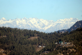 विश्वप्रसिद्ध पश्मीना शॉल को हिमाचल दे रहा बढ़ावा