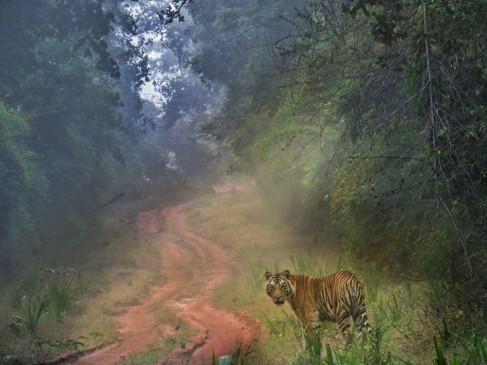 बाघ के हमले से घायल हो रहे इंसान, गांव में सनसनी