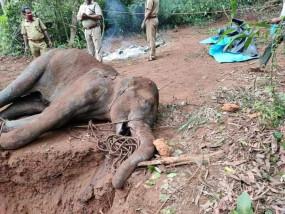 कोयंबटूर के पास चोटिल हाथी की मौत