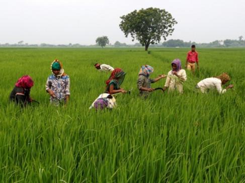 फसल लोन पर ब्याज में छूट 31 अगस्त तक बढ़ाई गई, किसानों के लिए राहत भरी खबर