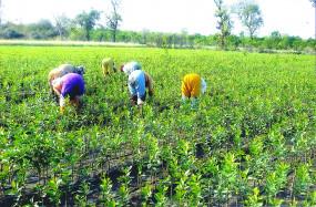 महाराष्ट्र के किसानोंको 5 प्रतिशत राशि के भुगतान पर मिलेगा बीमालाभ