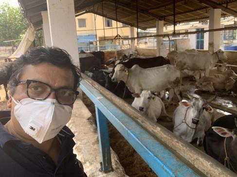 बीजेपी के कृष्ण गोपाल से मिलिए, जो सड़क से उठाईं 11 सौ गायों की कर रहे देखभाल