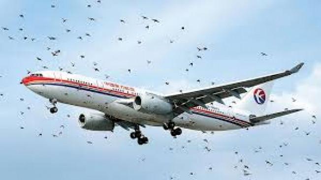 विमानतल पर उड़ान कम होने से पक्षियों का खतरा बढ़ा, डीजीसीए ने कहा - सावधानी बरतें