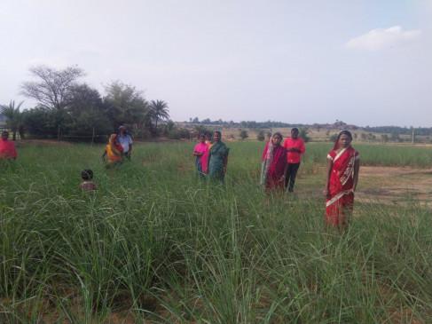 लेमन ग्रास की खेती से आत्मनिर्भर बन रही झारखंड की ग्रामीण महिलाएं