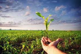 6 लाख 63 हजार किसानों के खेतों में पहुंचाया खाद-बीज, अमरावती विभाग में सबसे ज्यादा