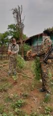 संदिग्ध नक्सली गांव में कर रहा था गांजा की खेती -दो हत्याओं का है आरोपी ,हुआ गिरफ्तार
