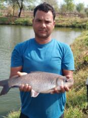 युवक ने नहीं मानी हार - 30 डिसमिल के तालाब से मछली पालन कर कमाए 16 लाख रू.