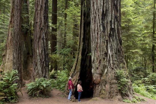 भोपाल के वन विहार में 22 जून से शुरु होंगी पर्यटन गतिविधियां