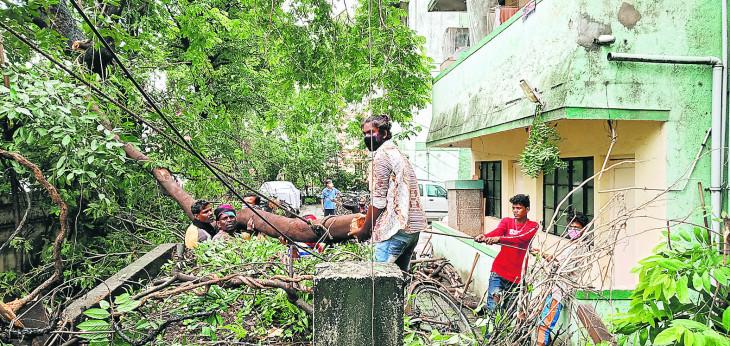 वृक्ष कटाई पर बवाल, मनपा को करना पड़ा पंचनामा