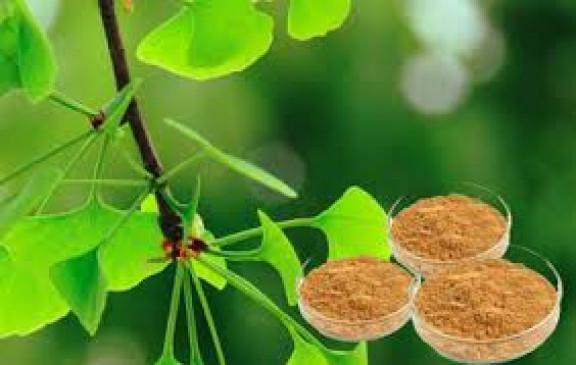 वनस्पति से बनाए चांदी के नैनो पार्टिकल