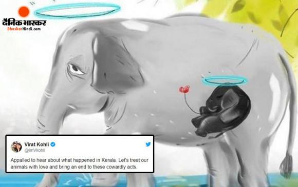#KeralaElephantMurder: कोहली ने कहा-जानवरों से ऐसे कायरतापूर्ण कृत्य बंद होने चाहिए, छेत्री-उमेश ने दोषियों को राक्षस बताया