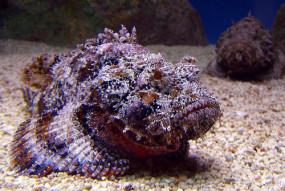 अजब-गजब: दुनिया की सबसे जहरीली मछली, जिसका एक बूंद जहर पूरा शहर मिटा सकता है