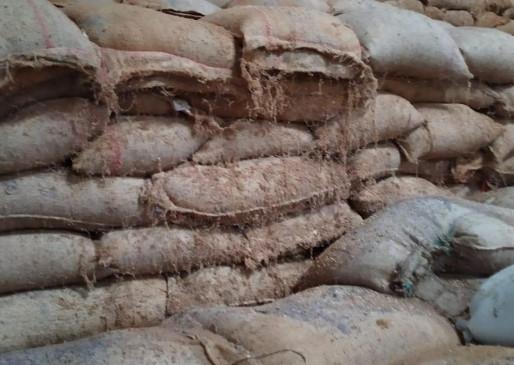 बरौंदा से बरामद हुई चोरी की 800 बोरी धान - कुठला पुलिस ने दो आरोपियों को किया गिरफ्तार, एक की तलाश