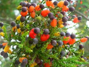 अजब-गजब: इस अनोखे पेड़ पर लगते हैं 40 तरह के अलग-अलग फल