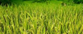 नरखेड़ तहसील में कृषि संजीवनी सप्ताह का शुभारंभ