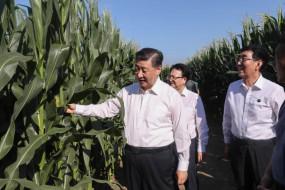 चीन में काली मिट्टी वाला चर्चित इलाका..