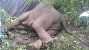 झारखंड: लातेहार के बेतला नेशनल पार्क में हाथी की मौत, शव बरामद