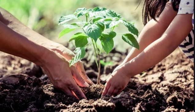 जगदलपुर : 'मुनगा' पौधरोपण का विशेष अभियान 6 जुलाई को