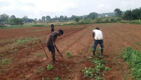 झारखण्ड : नेतरहाट में स्ट्रॉबेरी की खेती से जीवन में मिठास घोल रहे किसान