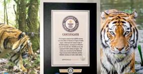 उपलब्धि: भारत में बाघों का सर्वे गिनीज वर्ल्ड रिकॉर्ड में दर्ज हुआ, 26 हजार से ज्यादा स्थानों पर वन्यजीवों के 3.5 करोड़ फोटो लिए गए