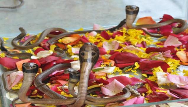 नाग पंचमी 2020: आज बने हैं दो दुर्लभ योग, इस शुभ मुहूर्त में करें पूजा
