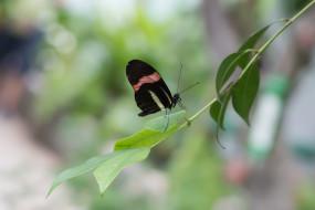 उप्र : गोरखपुर में जल्द सजेगा तितलियों का रंग-बिरंगा संसार