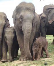 महामारी के बीच बेंगलुरु के चिड़ियाघर में हाथी का जन्म