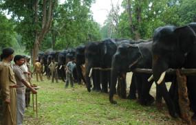 कान्हा टाइगर रिजर्व में हाथियों को होगी खातिरदारी - एक सप्ताह तक चलेगा आयोजन